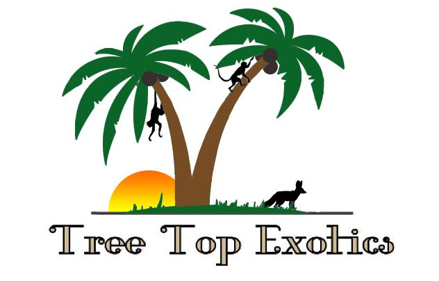 Tree Top Exotics